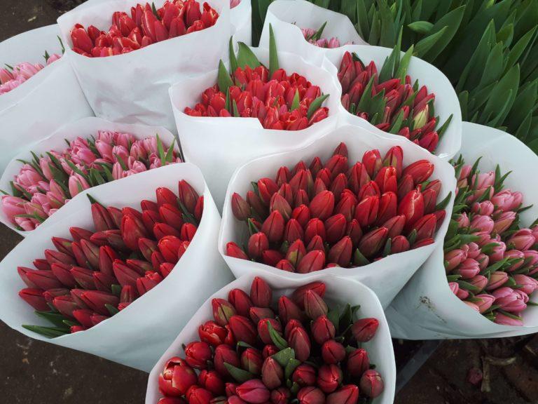 Изображение букетов красных и розовых тюльпанов первого и второго сорта, экстра и премиум класса